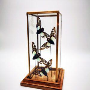 sous cloche cabinet de curiosité papillon boutique design Toulouse