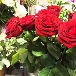 Rose rouge Toulouse Boutiques Alocasia