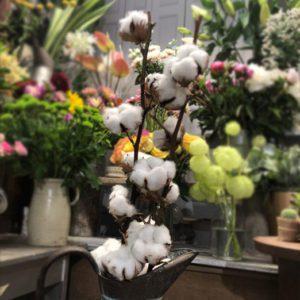 Branche de coton Toulouse Boutiques Alocasia