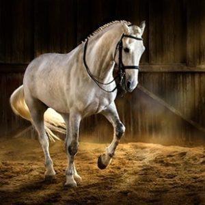Matériel pour le cheval