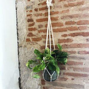 Plante-verte-corde Toulouse boutique