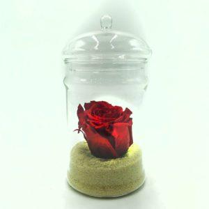 Rose sous cloche Toulouse Boutiques Alocasia