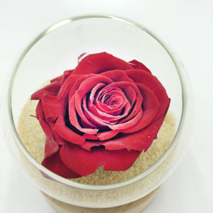 Toulouse Boutiques Alocasia rose dans le sable