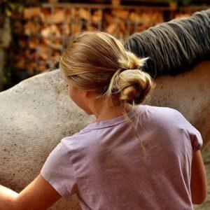 Soins pour le cheval