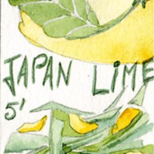 saveurs et harmonie japan lime Toulouse boutique