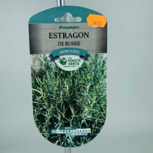 Estragon de Russie jardinerie Toulouse