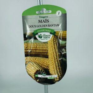 Maïs doux Golden Bantam semis Toulouse