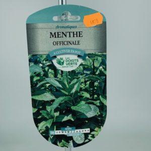 Menthe Officinale jardinerie Toulouse